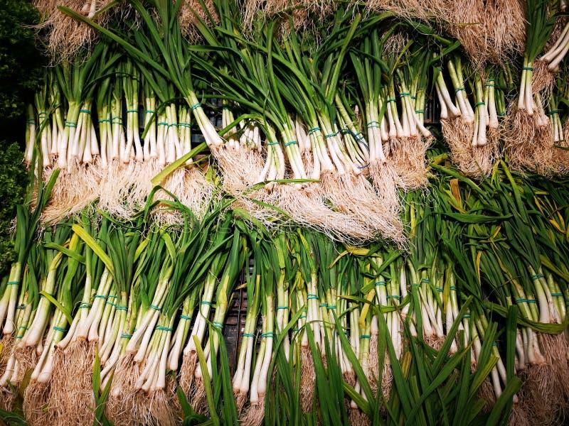 Πράσινες συνδέσεις κρεμμυδιών με τη ρίζα στοκ φωτογραφία με δικαίωμα ελεύθερης χρήσης