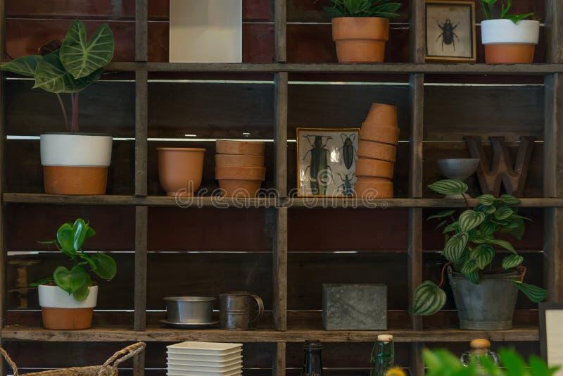 Πράσινες φυσικές εγκαταστάσεις σπιτιών στο δοχείο στο ξύλινο ράφι για την εγχώρια κηπουρική διακοσμητική στοκ εικόνες με δικαίωμα ελεύθερης χρήσης