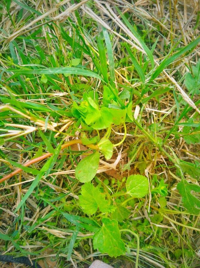 Πράσινη άγρια χλόη στη φύση στοκ φωτογραφία με δικαίωμα ελεύθερης χρήσης