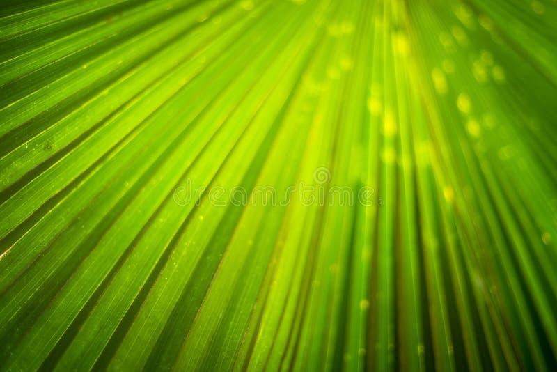 Πράσινη άδεια κάτω από τον ήλιο στοκ φωτογραφίες