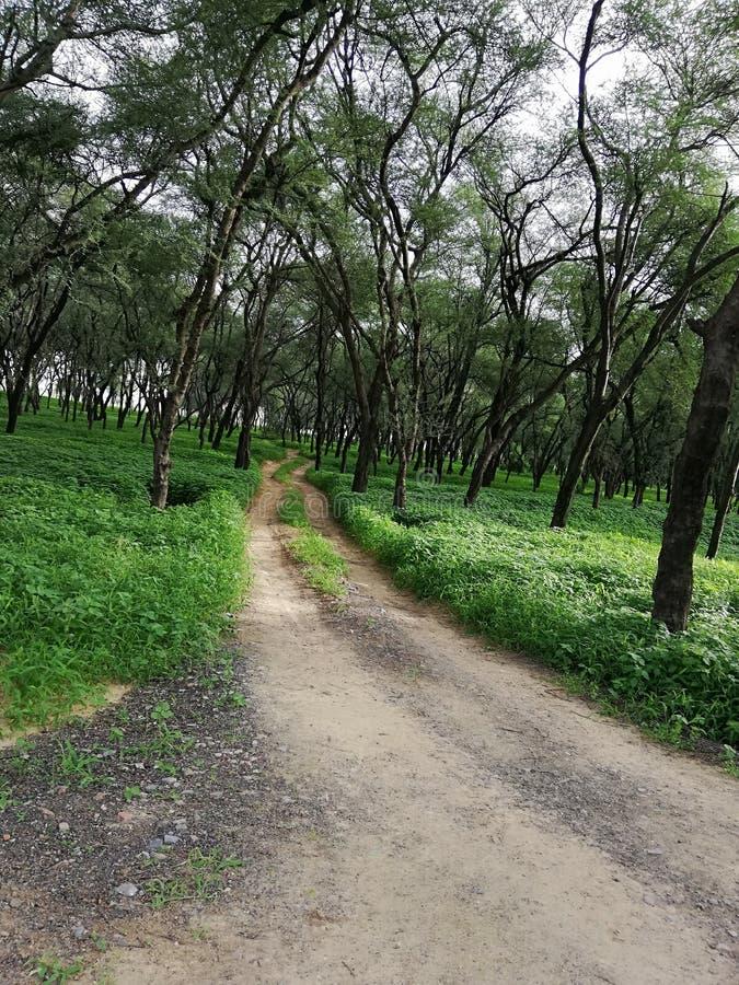 πράσινη άκρη του δρόμου στοκ φωτογραφία με δικαίωμα ελεύθερης χρήσης