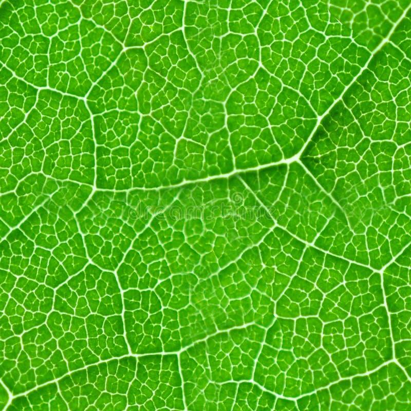 Πράσινη άνευ ραφής σύσταση φύλλων στοκ εικόνα με δικαίωμα ελεύθερης χρήσης