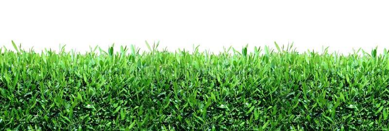 πράσινη άνοιξη χλόης ανασκόπησης στοκ εικόνες