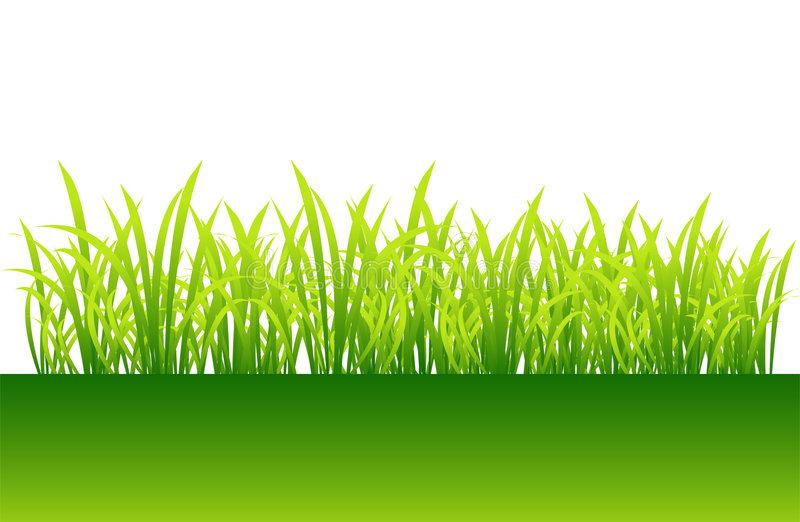 πράσινη άνοιξη χλόης σχεδίο& διανυσματική απεικόνιση