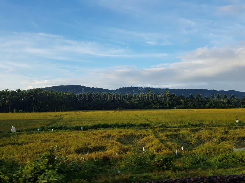 Πράσινη άποψη του Κεράλα βουνών από Τοπία τραίνων στοκ εικόνα