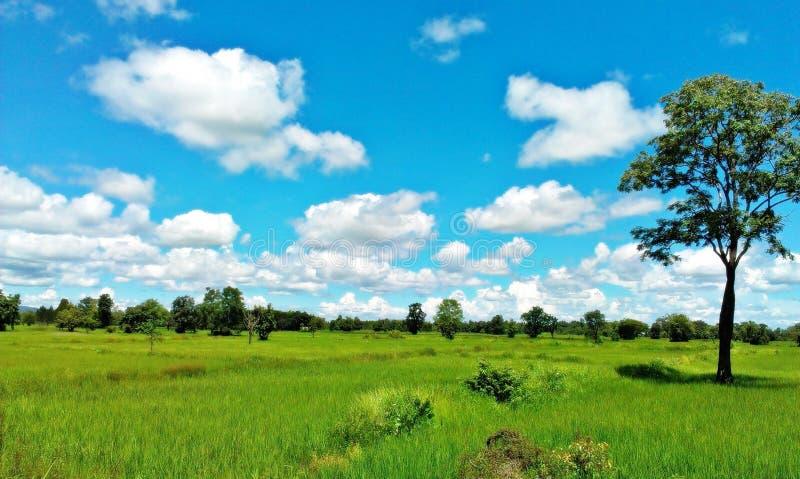 Πράσινη έννοια απείρου περιβάλλοντος μπλε ουρανού τομέων στοκ εικόνες με δικαίωμα ελεύθερης χρήσης