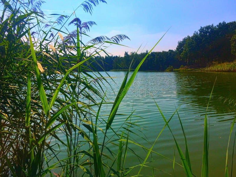 πράσινη λίμνη στοκ φωτογραφίες