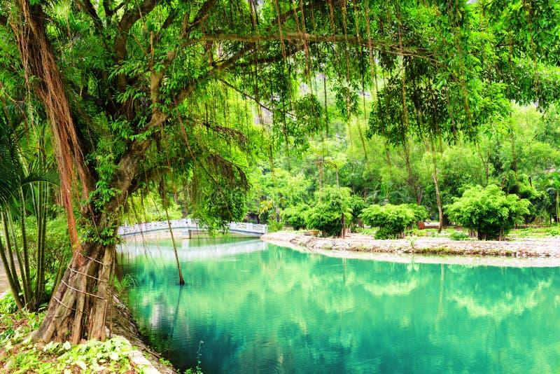 Πράσινη ανάπτυξη δέντρων κοντά στο κανάλι με το κυανό νερό στον κήπο στοκ εικόνα με δικαίωμα ελεύθερης χρήσης
