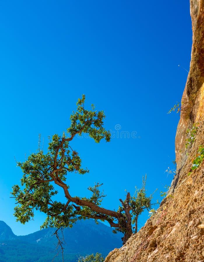 Πράσινη ανάπτυξη δέντρων στο πορτοκαλί κάθετο υπόβαθρο μπλε ουρανού βράχου στοκ φωτογραφία