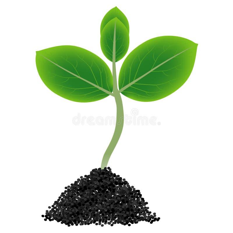 Πράσινη ανάπτυξη νεαρών βλαστών έξω από το χώμα που απομονώνεται στο άσπρο υπόβαθρο διανυσματική απεικόνιση