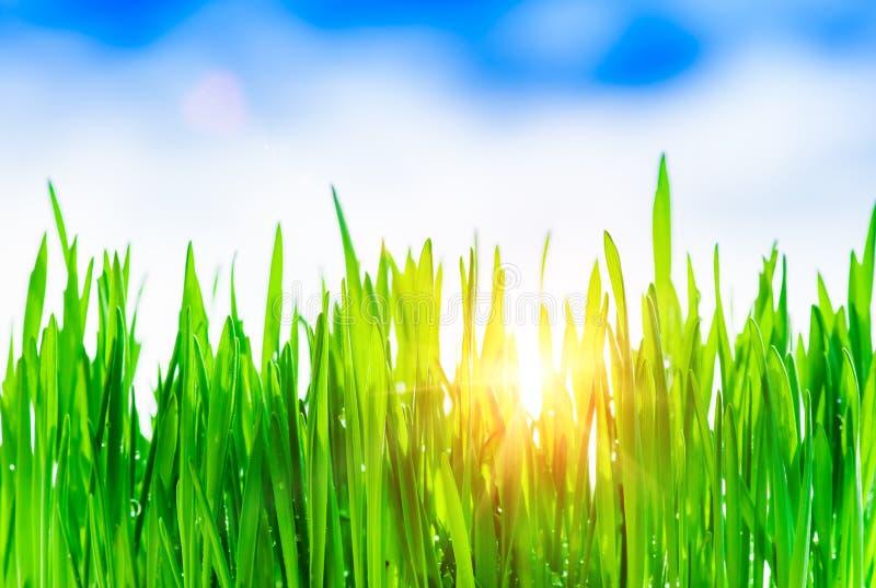 Πράσινη ανασκόπηση χλόης στοκ φωτογραφία με δικαίωμα ελεύθερης χρήσης