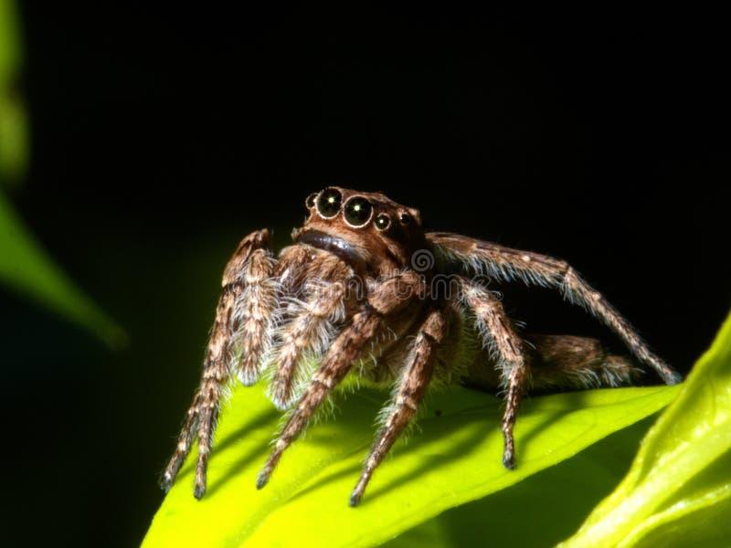 πράσινη αράχνη φύλλων στοκ φωτογραφία