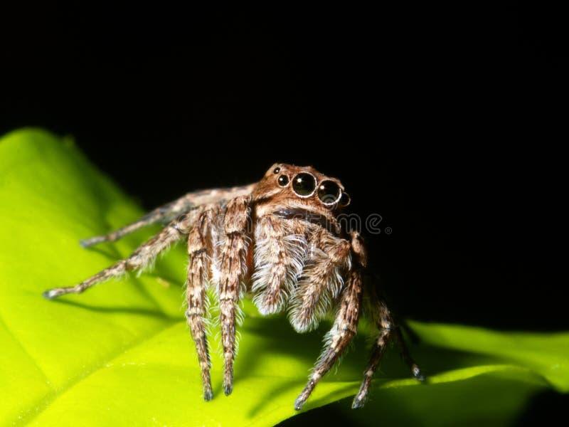 πράσινη αράχνη φύλλων στοκ φωτογραφίες με δικαίωμα ελεύθερης χρήσης