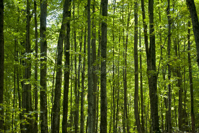 Πράσινη αύξηση δέντρων στοκ φωτογραφίες