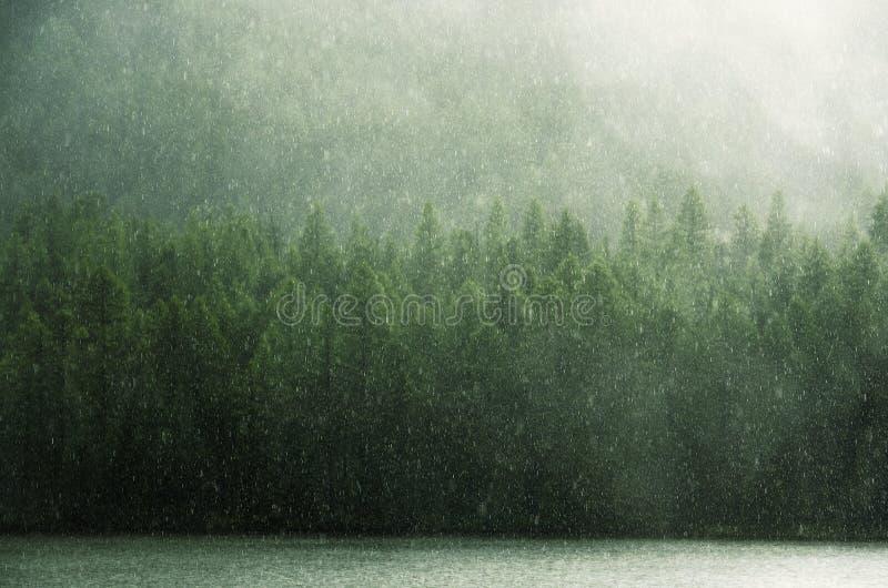 Πράσινη βροχή και πράσινη δύση Sayan κορωνών στοκ εικόνες