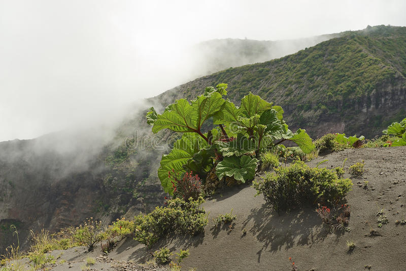 Πράσινη βλάστηση στην πλευρά του κρατήρα ηφαιστείων Irazu στην οροσειρά κεντρική κοντά στην πόλη Cartago, Κόστα Ρίκα στοκ φωτογραφία με δικαίωμα ελεύθερης χρήσης