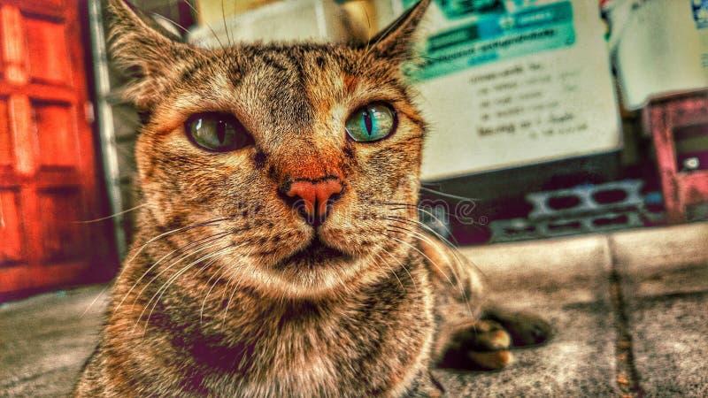Πράσινη γάτα ματιών στοκ εικόνα με δικαίωμα ελεύθερης χρήσης