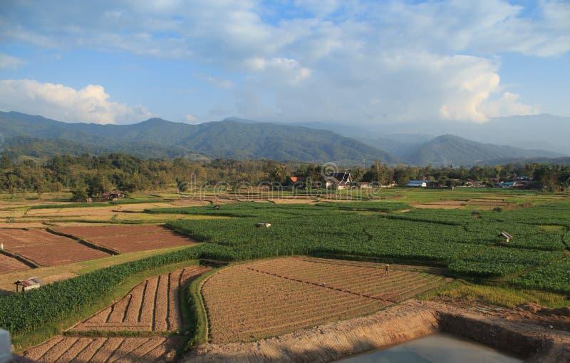 Πράσινη γεωργία εγκαταστάσεων βρεφικών σταθμών τομέων στοκ φωτογραφίες με δικαίωμα ελεύθερης χρήσης