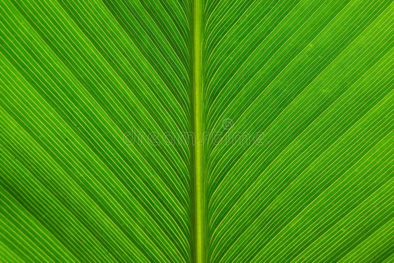 πράσινη γραμμή φύλλων στοκ φωτογραφία με δικαίωμα ελεύθερης χρήσης