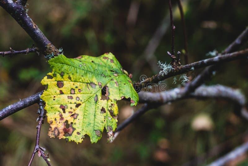Πράσινη δασική ανάπτυξη φύλλων πατωμάτων στοκ εικόνα