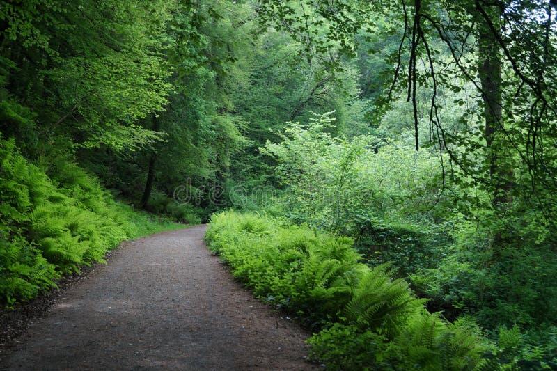 Πράσινη δασική φυσική διάβαση πεζών στοκ εικόνες με δικαίωμα ελεύθερης χρήσης