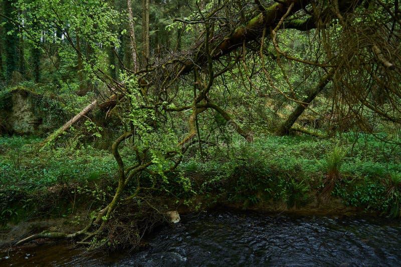 Πράσινη δασώδης περιοχή από τον ποταμό στοκ φωτογραφίες με δικαίωμα ελεύθερης χρήσης