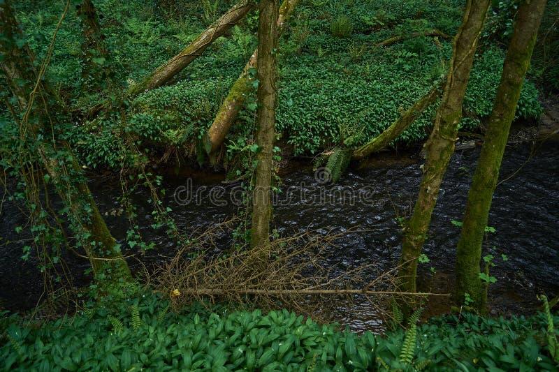 Πράσινη δασώδης περιοχή με το ρέοντας ποταμό στοκ φωτογραφία με δικαίωμα ελεύθερης χρήσης