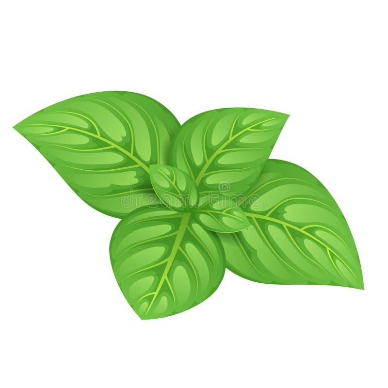Πράσινη διανυσματική απεικόνιση φύλλων βασιλικού διανυσματική απεικόνιση