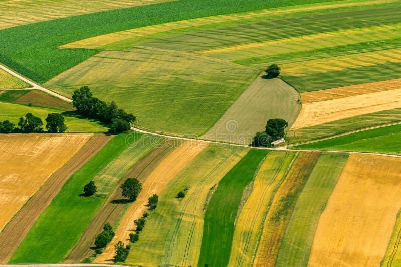 Πράσινη εναέρια άποψη τομέων πριν από τη συγκομιδή στοκ εικόνα με δικαίωμα ελεύθερης χρήσης