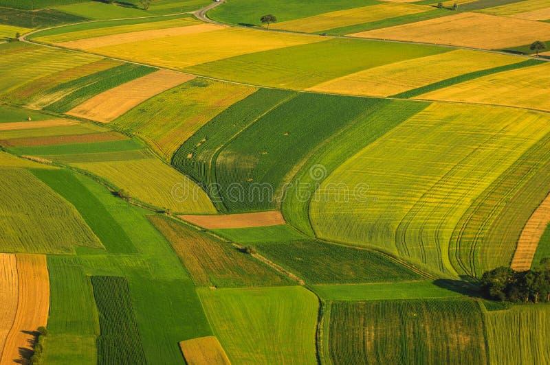 Πράσινη εναέρια άποψη τομέων πριν από τη συγκομιδή στοκ φωτογραφία