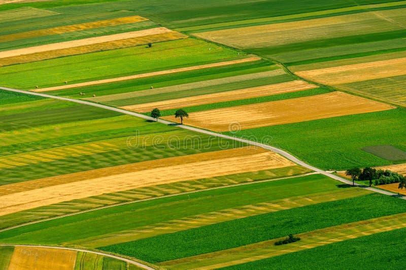 Πράσινη εναέρια άποψη τομέων πριν από τη συγκομιδή στοκ εικόνες με δικαίωμα ελεύθερης χρήσης
