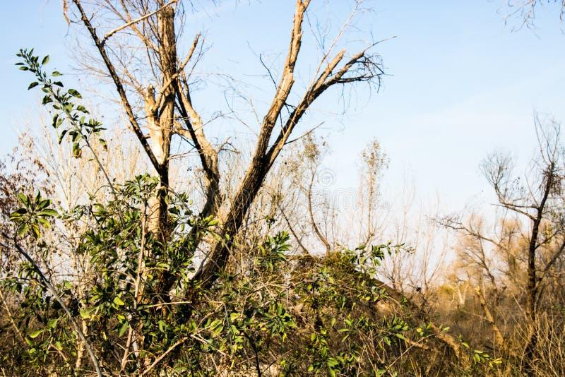 Πράσινη ζωή μεταξύ των νεκρών δέντρων στοκ εικόνα