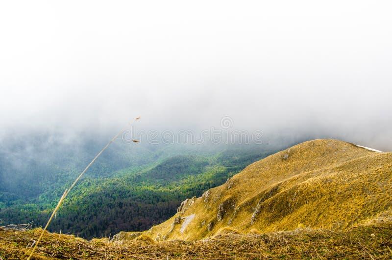 Πράσινη και κίτρινη χλόη στα βουνά Καύκασου στη Ρωσία το Μάιο σε Lagonaki στοκ εικόνες με δικαίωμα ελεύθερης χρήσης