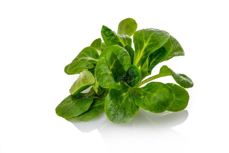 Πράσινη κινηματογράφηση σε πρώτο πλάνο σαλάτας καλαμποκιού στοκ φωτογραφίες με δικαίωμα ελεύθερης χρήσης