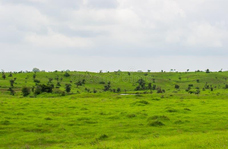 Πράσινη κυματιστή έκταση στοκ εικόνες με δικαίωμα ελεύθερης χρήσης