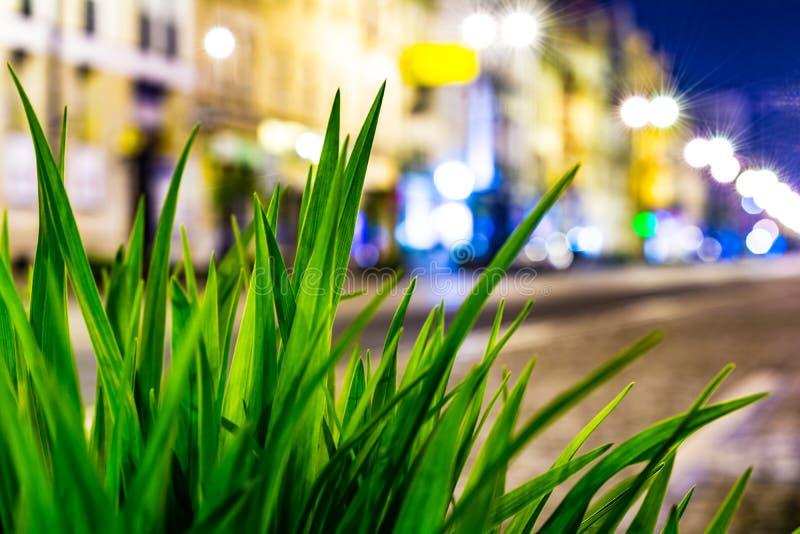 Πράσινη μακροεντολή χλόης στο υπόβαθρο μιας αναμμένης οδού τη νύχτα στοκ φωτογραφία