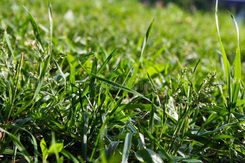 πράσινη μακροεντολή χλόης στοκ φωτογραφία