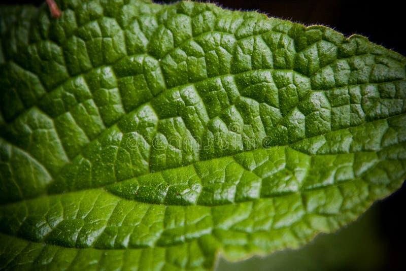 Πράσινη μακροεντολή άδειας στοκ φωτογραφίες