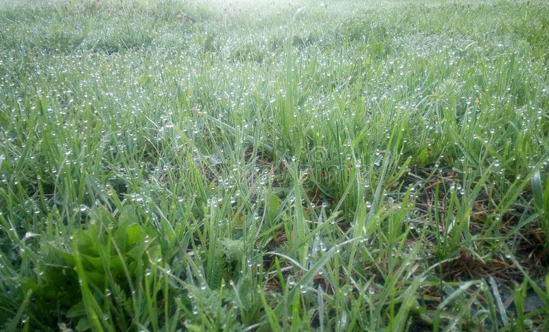 Πράσινη νέα χλόη στη δροσιά σε ένα πρωί άνοιξη, ελαφρύς πυροβολισμός στοκ φωτογραφία με δικαίωμα ελεύθερης χρήσης