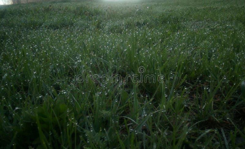 Πράσινη νέα χλόη στη δροσιά σε ένα πρωί άνοιξη, σκοτεινός πυροβολισμός στοκ εικόνες
