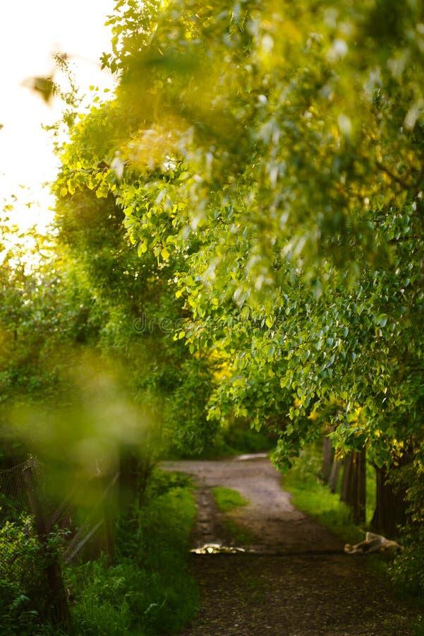 Πράσινη πάροδος σε ένα χωριό στις ακτίνες του ήλιου ρύθμισης στοκ φωτογραφία με δικαίωμα ελεύθερης χρήσης