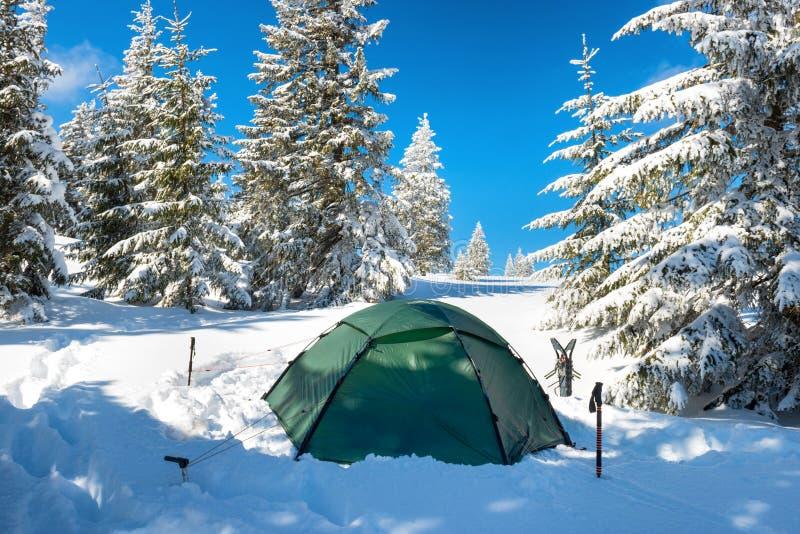Πράσινη σκηνή στο χειμερινό δάσος στοκ εικόνες