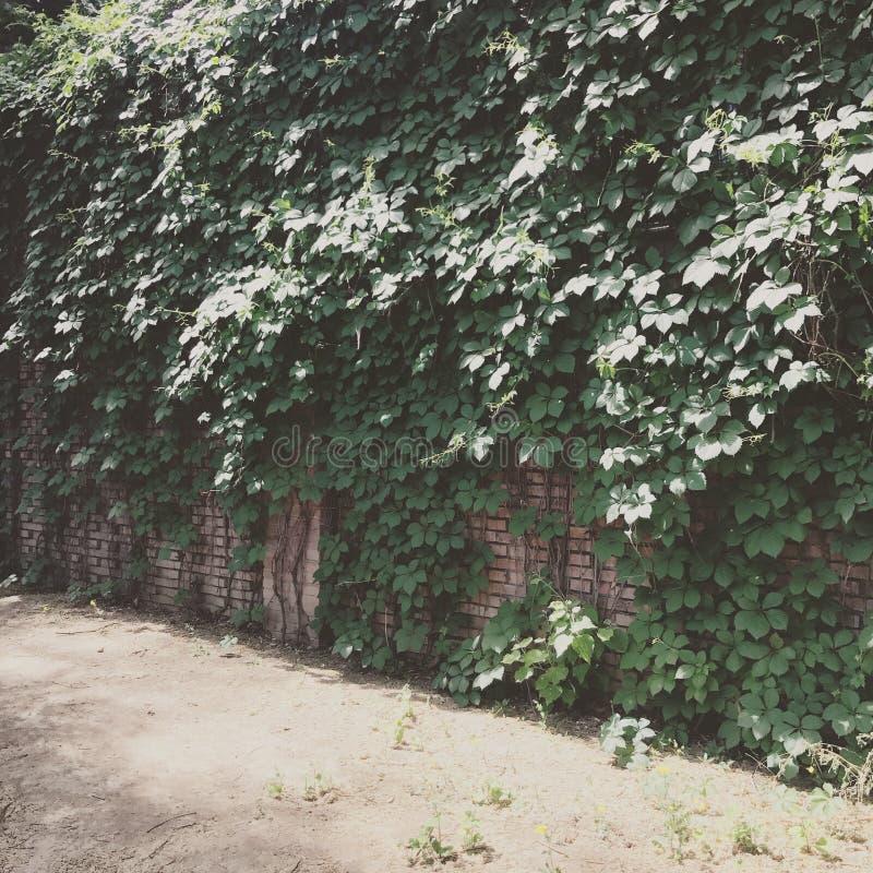 πράσινη σκηνή στοκ φωτογραφίες