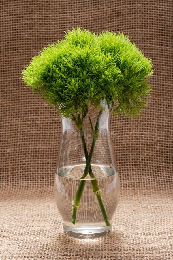 Πράσινη σφαίρα - Dianthus Barbatus - ο γλυκός William Μοναδική σφαίρα-διαμορφωμένη, πράσινα λουλούδια ασβέστη στο σαφές βάζο γυαλ στοκ φωτογραφία με δικαίωμα ελεύθερης χρήσης
