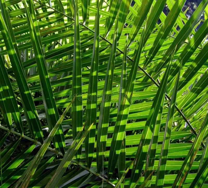 πράσινη σύσταση άδειας στοκ εικόνες