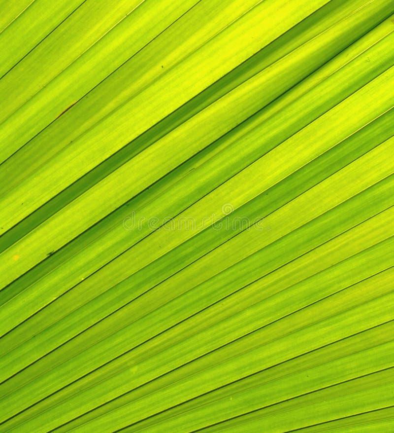 πράσινη σύσταση άδειας στοκ φωτογραφία