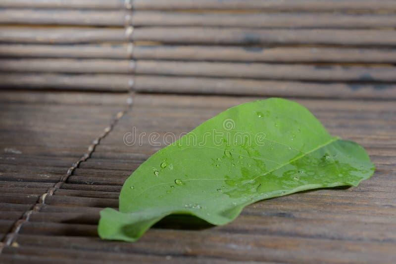 Πράσινη σύσταση μπαμπού φύλλων στοκ φωτογραφίες με δικαίωμα ελεύθερης χρήσης