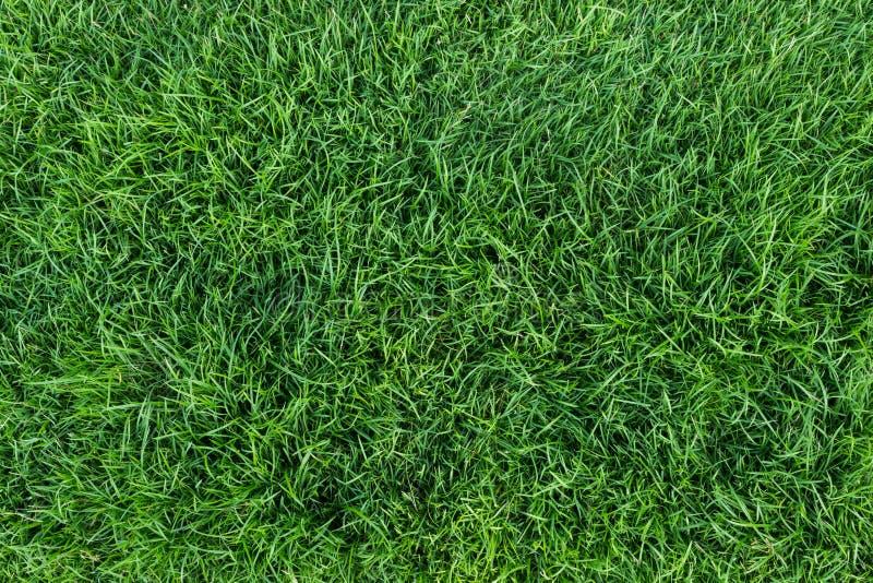 πράσινη σύσταση χλόης στοκ φωτογραφία με δικαίωμα ελεύθερης χρήσης