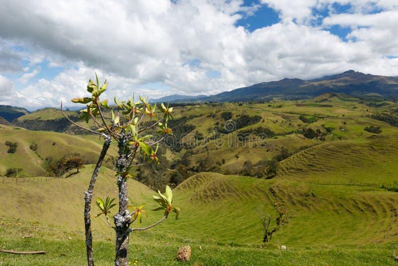 Πράσινη φρέσκια ζούγκλα στα κολομβιανά υψηλά βουνά, Κολομβία, Λατινική Αμερική στοκ εικόνα