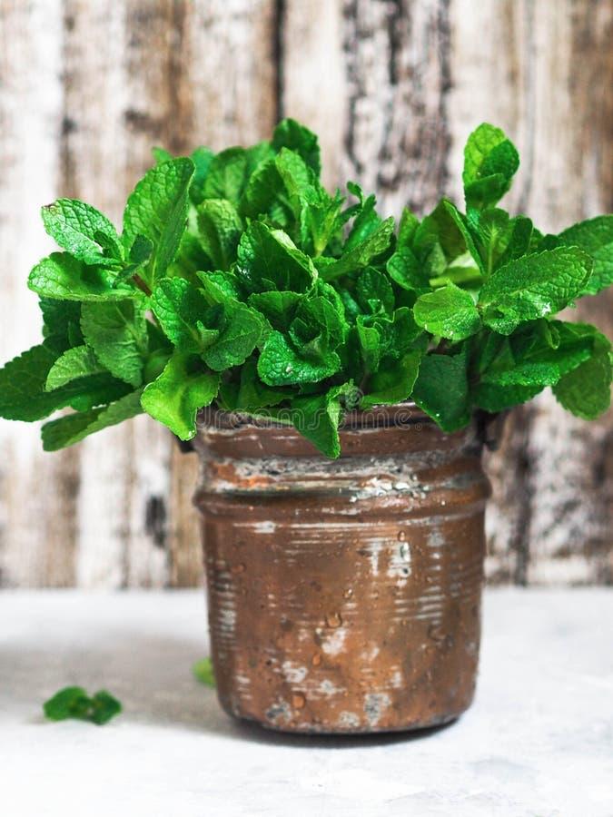 Πράσινη φρέσκια μέντα σε ένα δοχείο χαλκού στοκ εικόνες με δικαίωμα ελεύθερης χρήσης
